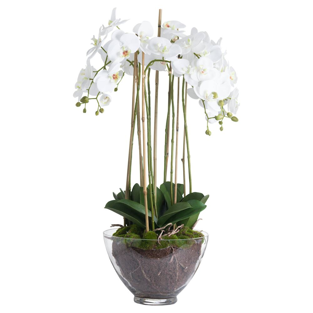Amoshi Large Orchid in Glass Pot (70X70X88CM)